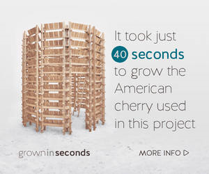 This American Cherry project took 40 seconds to be replaced in the forest